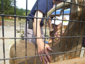 Petting goats with Grandpa and Mom